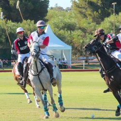 Troph  e international Mohammed VI de Polo  le Maroc domine l Egypte 4-1
