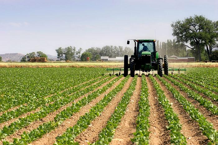 Les derni  res pluies ont sauv   la campagne agricole 2020-2021