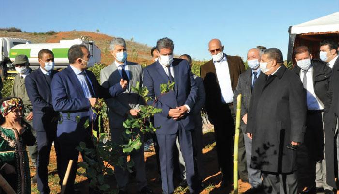 L agriculture marocaine se remet du choc de la s  cheresse