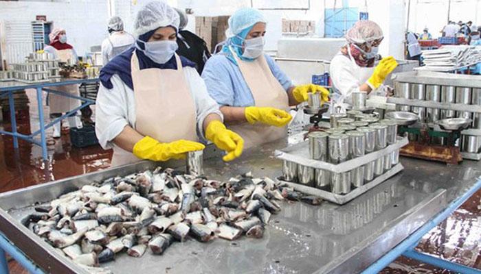 Difficult  s   conomiques dans l   industrie de la conserve de poissons